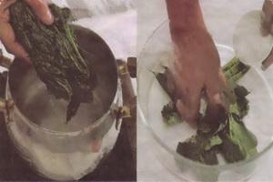 resep-tip-agar-daun-pepaya-tidak-pahit